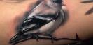 seminaire_tatouage_partage_joshua_carlton_thomas_carli_jarlier